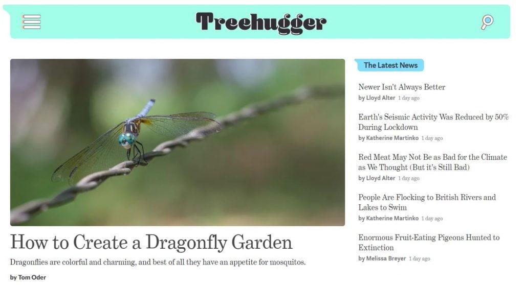 how much do bloggers make treehugger