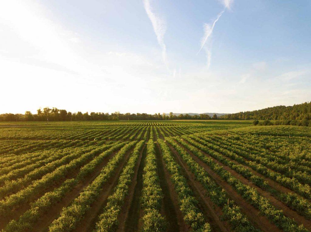 how to Make Money on A Farm richrow